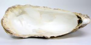 Calcium carbonicum - innere, schneeweiße der Austernschale