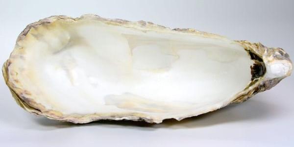 Calcium carbonicum – Austernschalenkalk