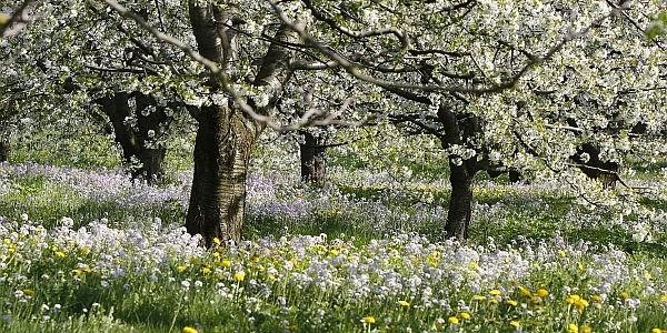 Raus in den Frühling! Durchstarten mit Homöopathie: die passenden Arzneien