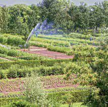 Heilpflanzengarten Nachwachsende Medizin