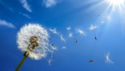 Pollen Allergie Homöopathie