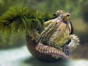 Sepia - Tinte des Tintenfischs