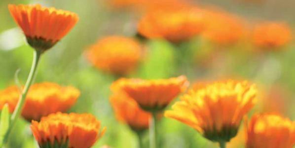 Homöopathie in der HNO-Heilkunde: Sommerausgabe Zeitschrift Homöopathie