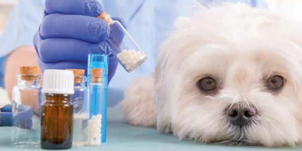 Tiermedizin: Die Grenzen der Selbstmedikation